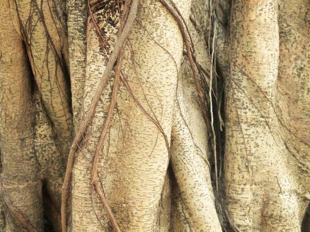 Tronco dell'albero