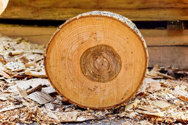 Tronco di legno con corteccia