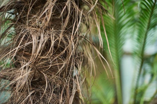 Tronco di palma con foglie di giungla tropicale sullo sfondo