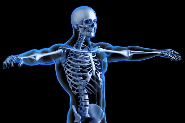 Tronco scheletrico umano. illustrazione 3d anatomica