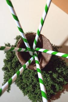 Tubi di carta biodegradabili per cocktail. muschio e vaso naturali. ombre e geometria