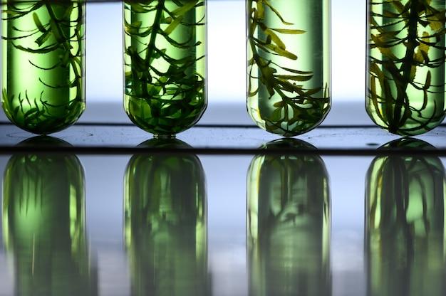 Tubo per biocarburanti di alghe nel laboratorio di biotecnologia