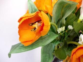 Tulipani arancioni, tulipani