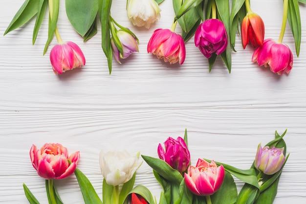 Tulipani del primo piano su bianco