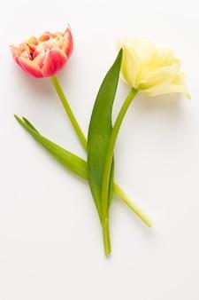 Tulipani di fiori di primavera su sfondo di colori pastello. stile vintage retrò.