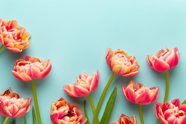 Tulipani di fiori di primavera su sfondo di colori pastello.