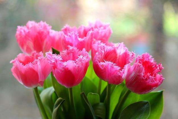 Tulipani di primavera in un vaso