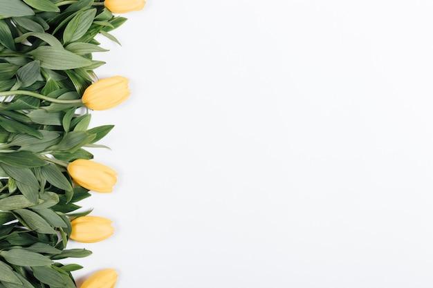Tulipani gialli con le foglie verdi sulla vista superiore del fondo bianco