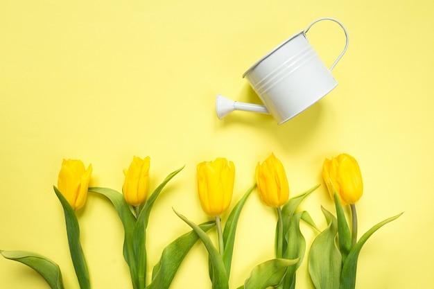 Tulipani gialli e viola dei fiori in un mazzo su un fondo giallo, un fondo festivo della molla