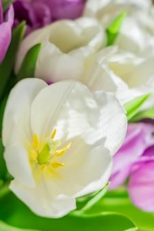 Tulipani in fiore bianchi e viola