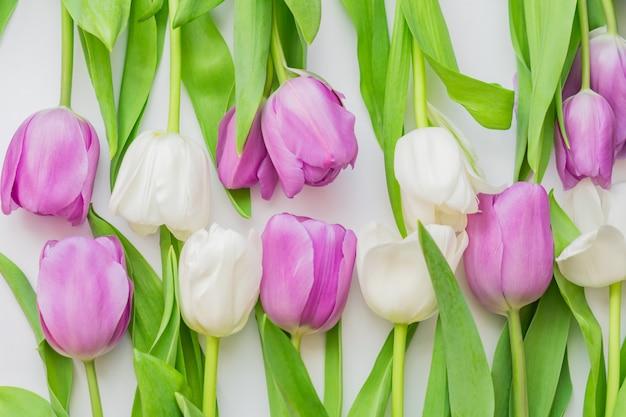Tulipani in fiore bianco e viola in uno sfondo floreale