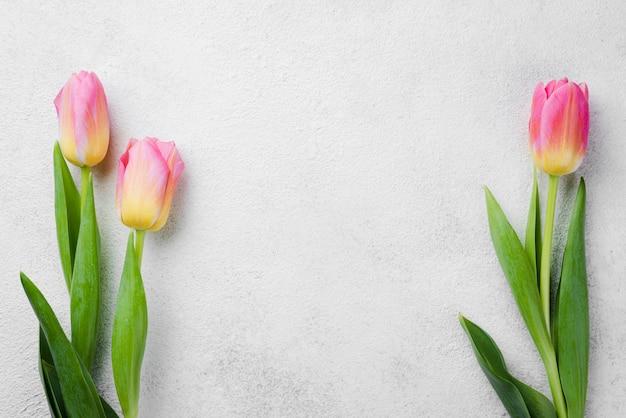 Tulipani rosa copia-spazio sul tavolo