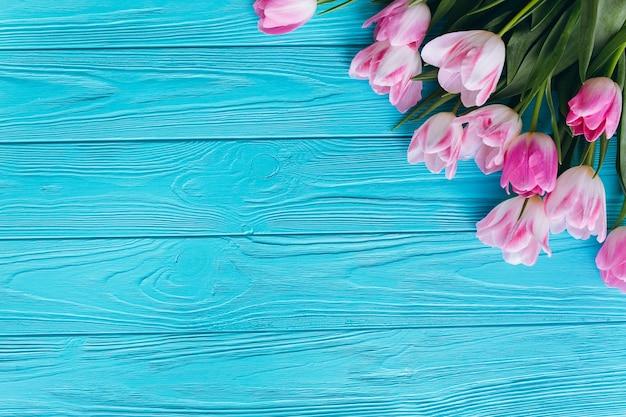 Tulipani rosa su uno sfondo blu in legno. vista dall'alto e lay flat.