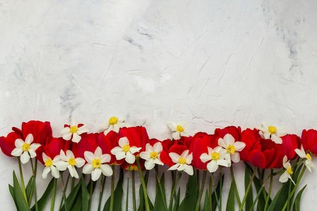 Tulipani rossi e narcisi bianchi su una superficie di pietra chiara. vista piana, vista dall'alto