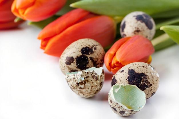 Tulipani rossi e uova di quaglia su sfondo bianco