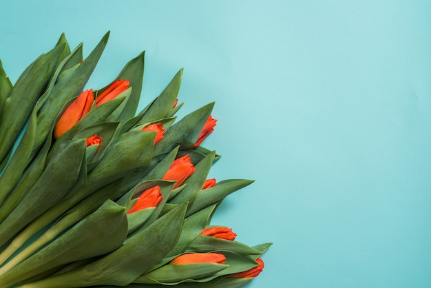 Tulipani rossi su fondo di legno blu