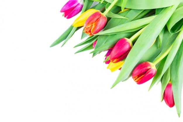 Tulipani su sfondo bianco, isolato