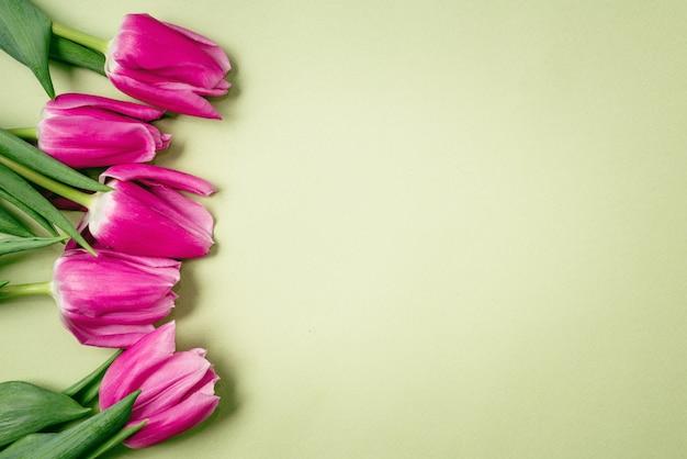 Tulipani viola della sorgente su una priorità bassa verde.