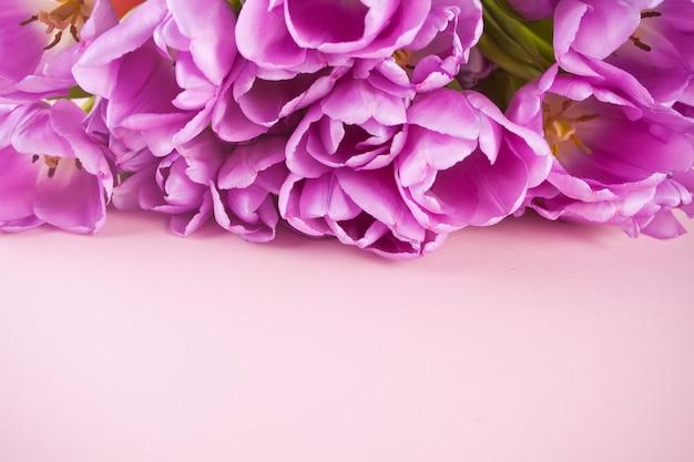 Tulipani viola viola sullo sfondo rosa. copia spazio