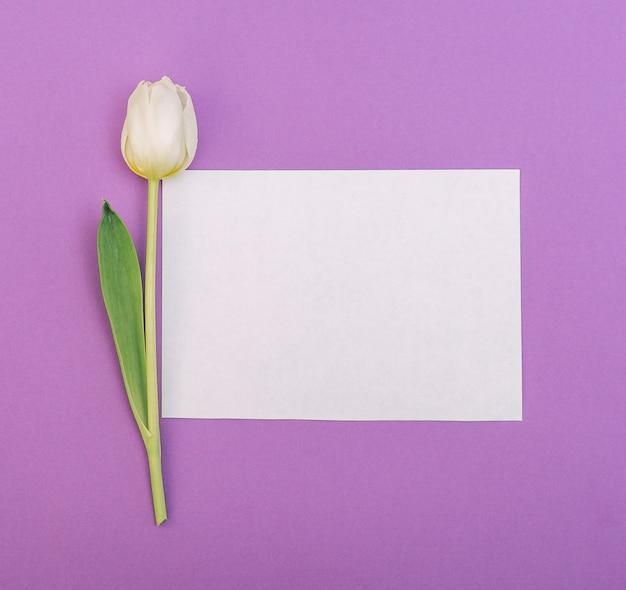 Tulipano bianco con carta bianca vuota su sfondo viola