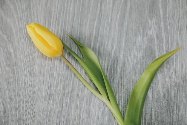 Tulipano giallo su sfondo grigio.