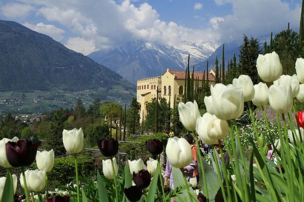 Tulipano nel castello di trauttmansdorff