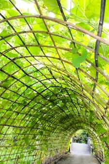 Tunnel della pianta verde nel giardino
