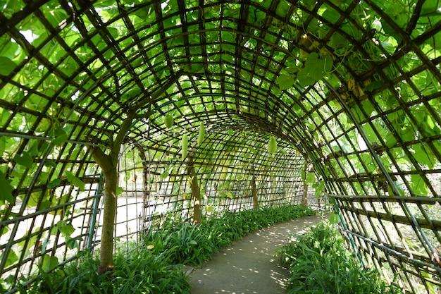 Tunnel di bambù con pianta verde in cima e accanto lungo una passerella