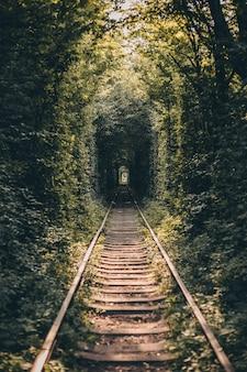 Tunnel ferroviario di alberi e cespugli, tunnel d'amore