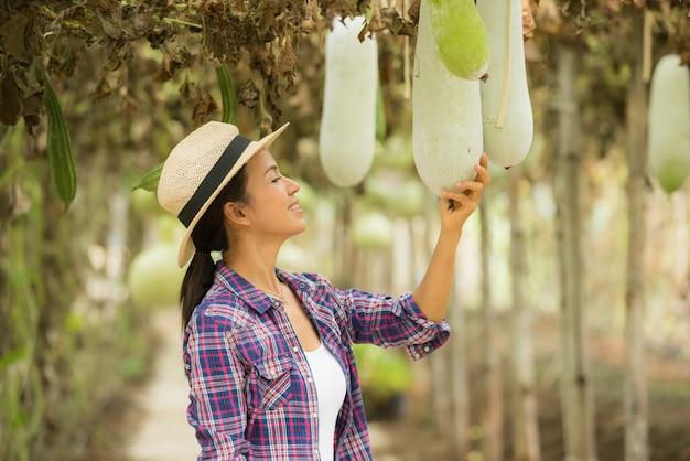 Tunnel winter melon e avere agricoltori per prendersi cura della fattoria