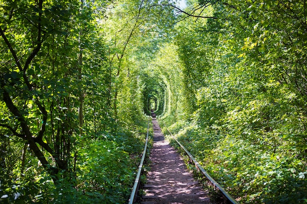Tunner verde nella foresta. luogo d'amore.