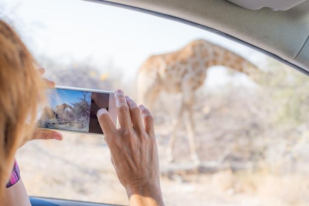 Turista che fotografa giraffa dall'automobile mentre sul safari della fauna selvatica dell'azionamento di auto