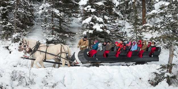 Turisti sulla slitta trainata da cavalli, banff national park, alberta, canada