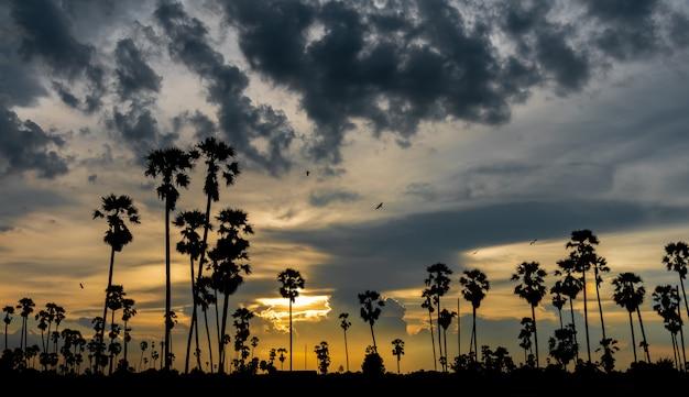 Twilight bellissimo paesaggio tramonto con palme da zucchero silhouette