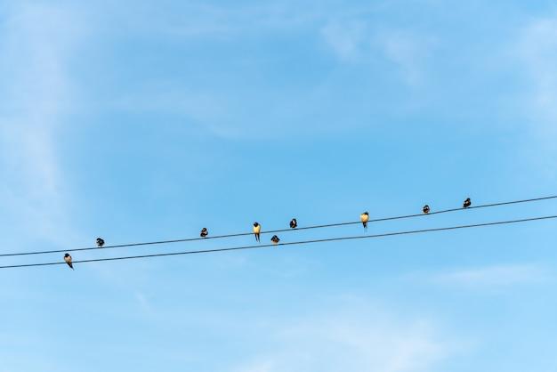 Uccelli appollaiati su fili elettrici
