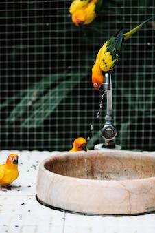 Uccelli che bevono acqua da una fontana