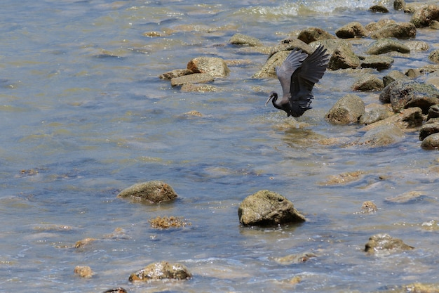 Uccelli che sbattono nel mare