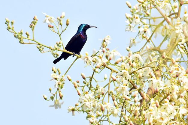 Uccelli del sole al fiore in un albero beanch