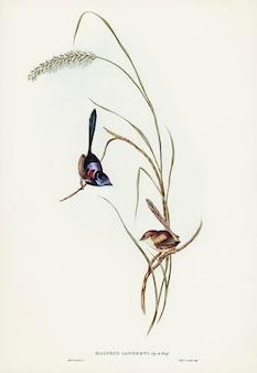 Uccelli dell'australia