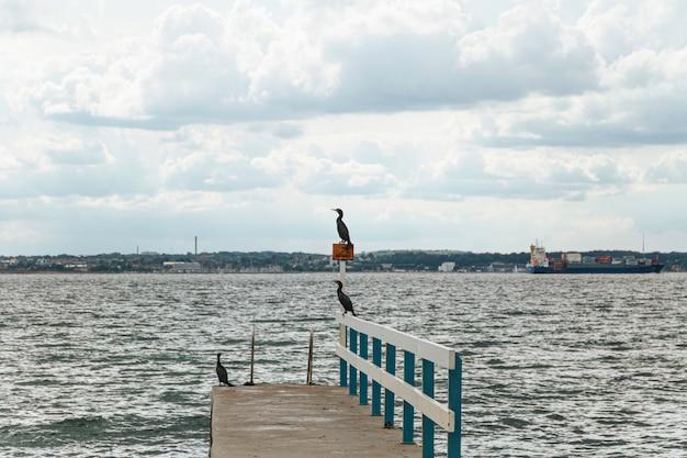 Uccelli di mare su un molo con il mare sullo sfondo., svezia, helsingborg