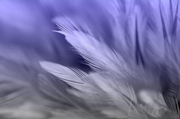 Uccelli e piume di pollo in stile morbido e sfocato per lo sfondo