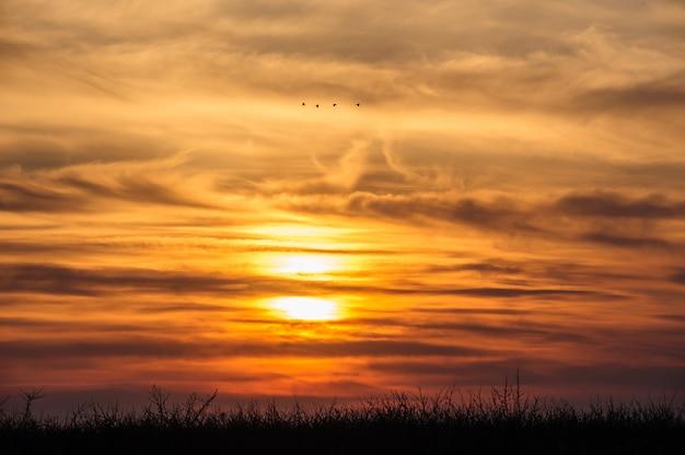 Uccelli in volo sullo sfondo del tramonto drammatico