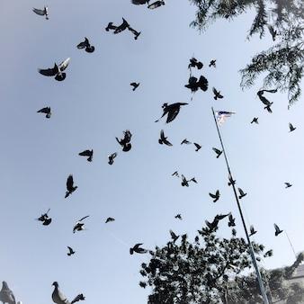 Uccelli nel cielo