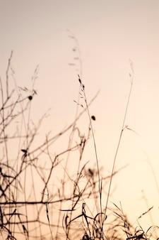 Uccelli sui rami degli alberi a gimli, manitoba, canada