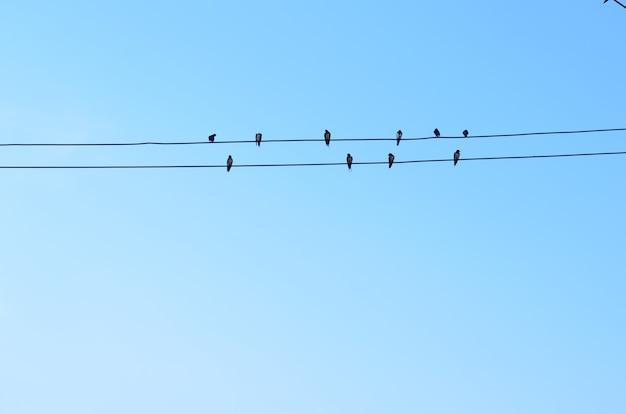 Uccelli sulla linea elettrica con sfondo blu del cielo