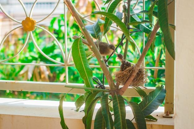 Uccellino in nido a casa delle persone.