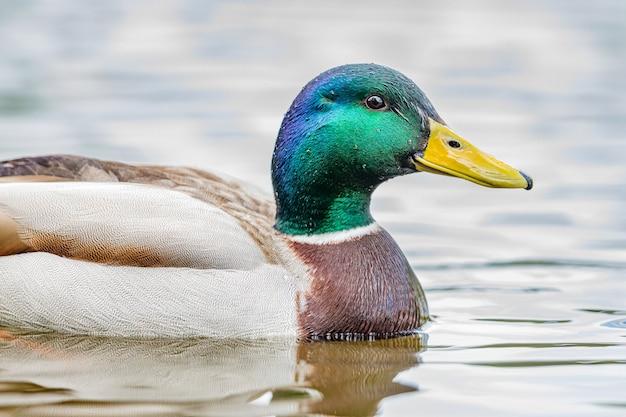 Uccello animale uccelli acquatici e anatra