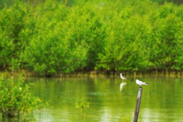 Uccello che sta sul bambù nella stagione di autunno e del lago