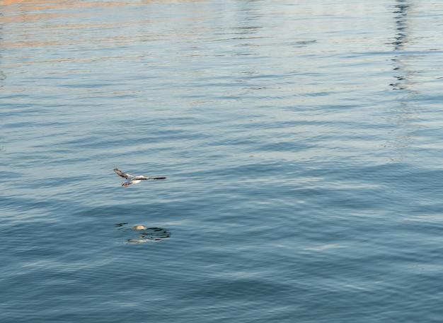 Uccello che vola a filo del mare