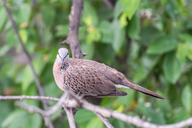 Uccello (colomba, piccione o disambiguazione) in una natura